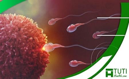 Những yếu tố khiến cho việc thụ thai thành công