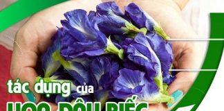 Những tác dụng của hoa đậu biếc với sức khỏe