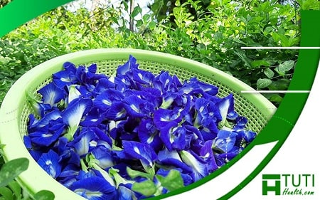 Bên cạnh những lợi ích, thì loại hoa này cũng có rất nhiều tác hại cần chú ý