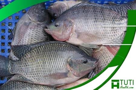 Cá rô phi chứa nhiều chất dinh dưỡng hữu ích với sức khỏe con người