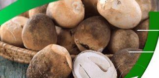 Nấm rơm là nấm ăn được với thành phần chứa nhiều vitamin